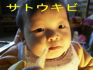 satoukibi-kiJPG.JPG