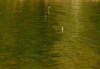 090420-fish-2junp1-.jpg
