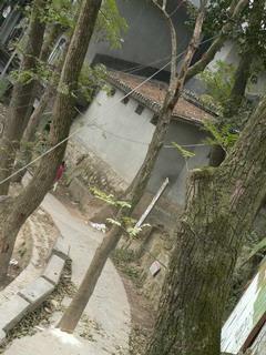 091220-kareki2-kiru-.jpg