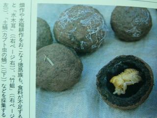 101202-Book-Kabutomusi-sanagi-.jpg