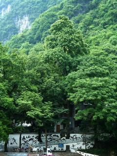 110614-ki-hana-.jpg