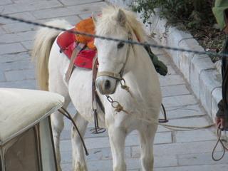 131229-whitehorse-.jpg
