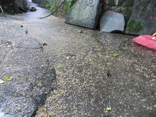 140531-otihana-souji-.jpg