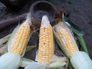 140622-mogitate-corn-.jpg