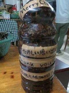141226-Kaito-sakePet-kaku-.jpg